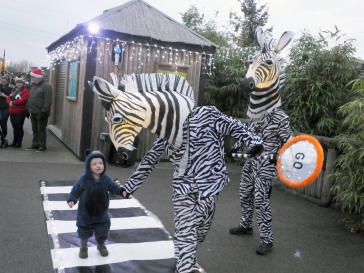 jim-zebra-crossing